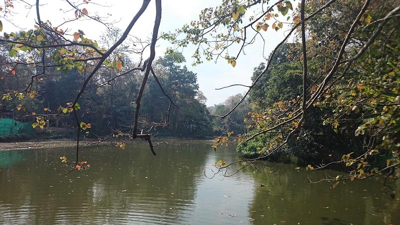 ワット・ウモーン敷地内にある池